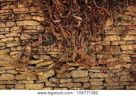 Old Stone Wall With Root Tree