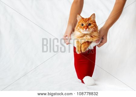 Women Holds A Red Christmas Hat With Ginger Cat In It. Cute Christmas Cozy Background