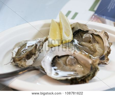 Delicious Oysters At Market