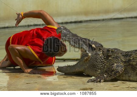 Crocodile-4