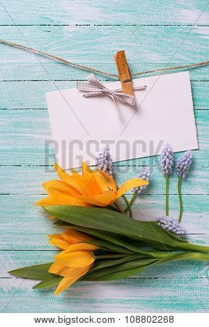 Background  With Fresh  Spring Yellow Tulips, Blue Muscaries Flowers  And Empty Tag On Clothes Line