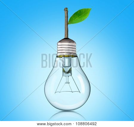 Light Bulb With Sprout