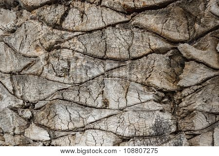 Bark Of A Palm Tree