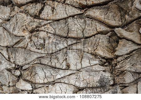 Bark Of A Palm Tree