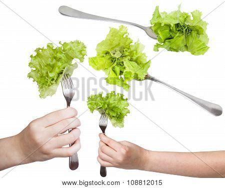 Set Of Dinning Forks With Fresh Leaf Lettuce
