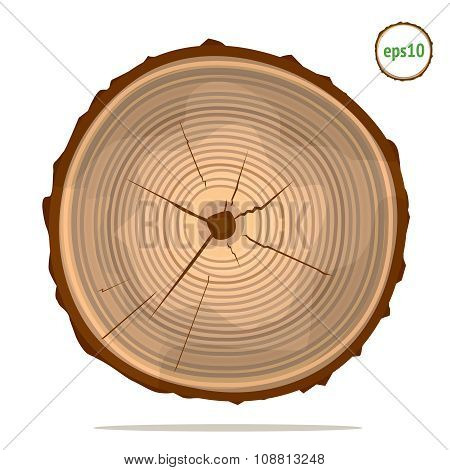 Tree-rings on a log