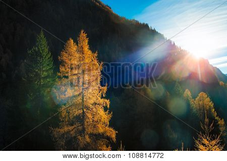 Coloreded Autum landscape with trees And Last Sun