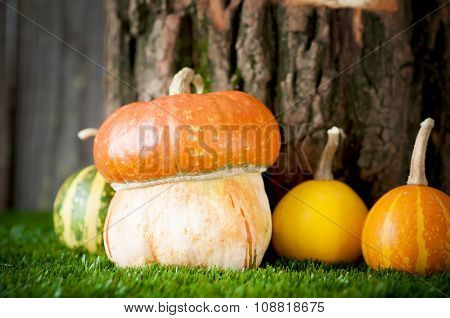 Small Decorative  Pumpkins On Green Grass