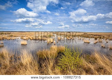 Raised Bogs Swamp Landscape