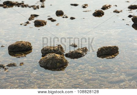 Stones With Acorn Barnacles In Low Sea Water