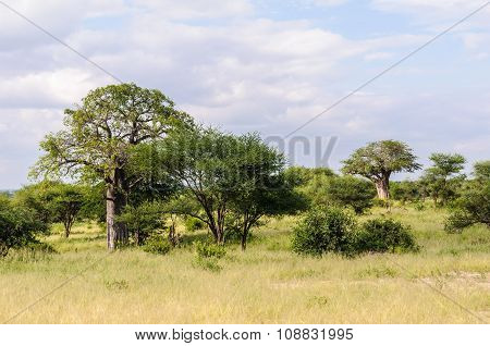 The Savannah In The Tarangire Park, Tanzania