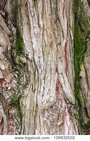 Texture Formed By The Bark Of An Old Tree
