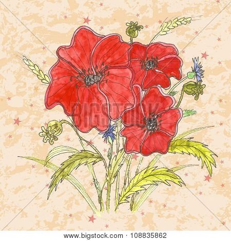 Red Poppy flowers. Hand drawn