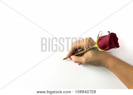 hand of woman with red rose in the act of drawing