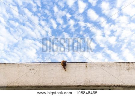 Business Concept Snail Walk On Wall With The Blue Sky In Background
