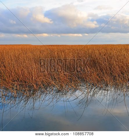 Dense Thickets Of A Dry Reed