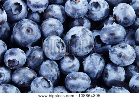 Fresh Blueberry Background