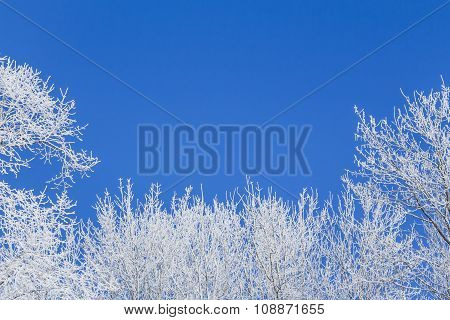 Blue Winter Frame With Snow Covered Trees Left Under Right