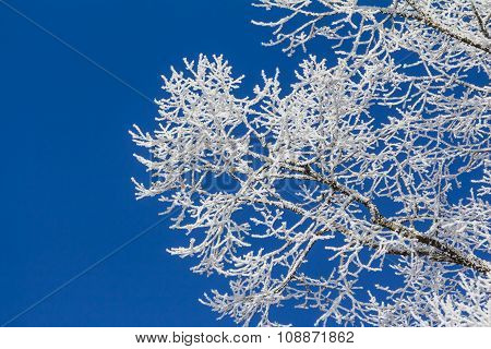 White Winter Wonderland With Blue Sky And Detailed Branches