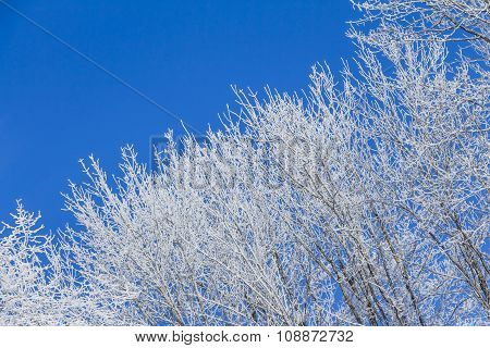 White Winter Wonderland With Blue Sky And Right Tree Row