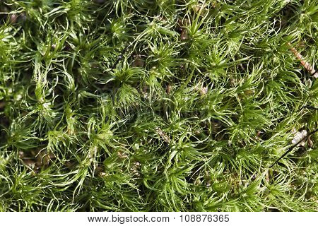 Mossy background, close-up