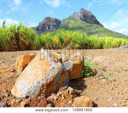 Mauritius Island typical landscape with volcanic boulders and sugarcane plantations under mountains.