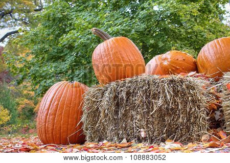 Halloween pumpkins and haystack
