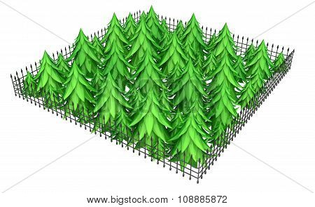 Firs Fence