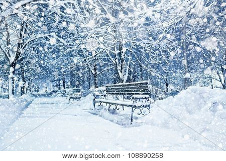 Snow covered trees and benches in city park
