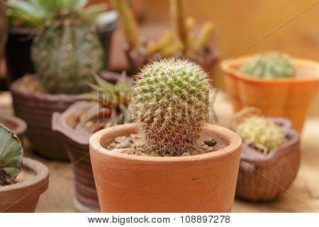 Small Cactus In Flowerpot In The Garden
