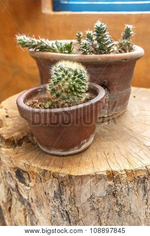 Small Cactus On The Stump Wood In The Garden On Selective Focus