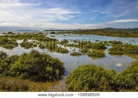 Developing Mangroves In Hokianga Estuary