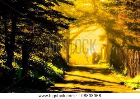walkway with sunlight