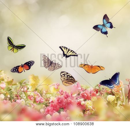 Flowers and Butterflies for Background