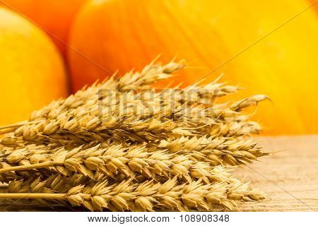 Wheat On Wooden Table On A Background Of Pumpkins. Thanksgiving