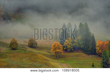 Autumn Color In A Valley, Dolomites