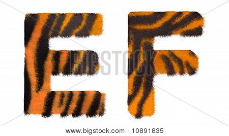 Tiger Fell E And F Letters Isolated
