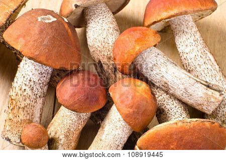 group of orange cap boletus