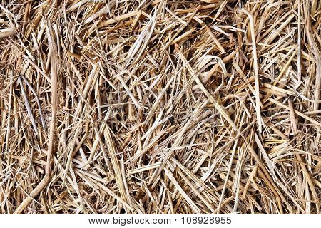 dry straw texture, useful for backgrounds