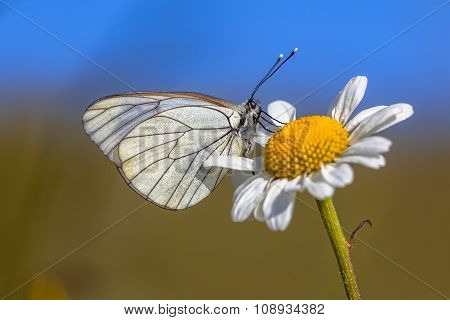 Black Veined White Blue Sky