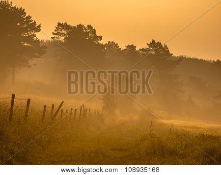 Orange Sunrise Path