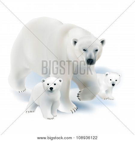 Polar bear and cubs.