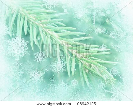 Winter Background With Isolated Pine Branch.frosted Fir-tree. Pine Branches Covered With Hoarfrost.c
