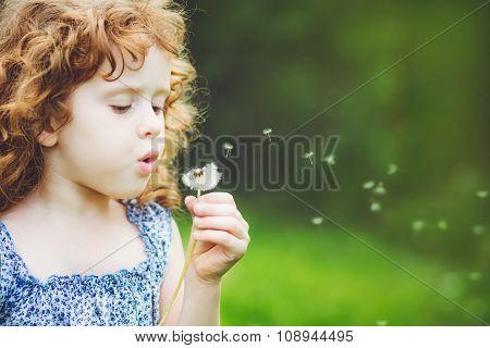 Little Curly Girl Blowing Dandelion