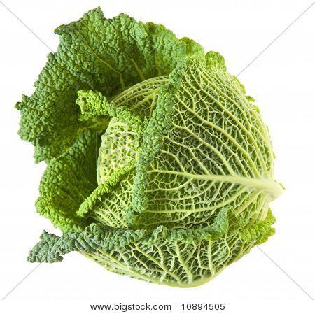 Savoy cabbage head
