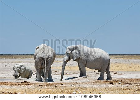 Elephants Drinking From A Waterhole