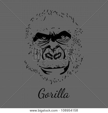 Vector gorilla. Grey background. Animal postcard.