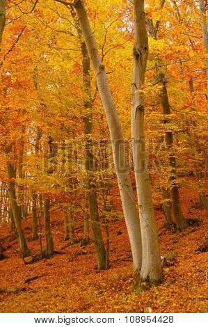 Autumn Leafy Woords