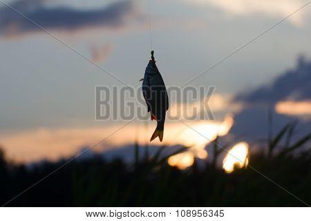 Summer Lake Fishing Rudd Fish At Sunset