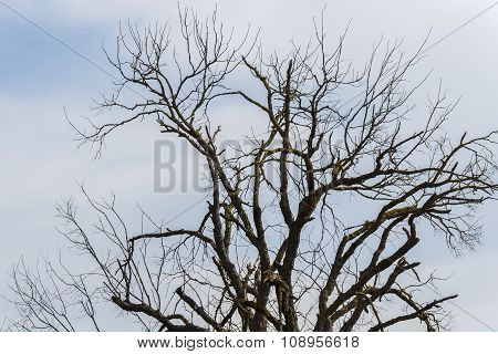 Dry Tree In The Middle Of Nature